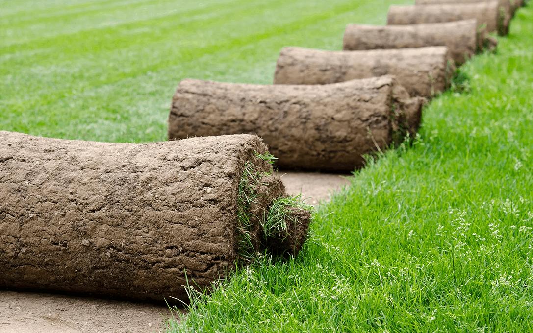 Harvested turf